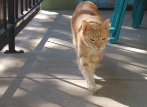 Vinny Walking (1)